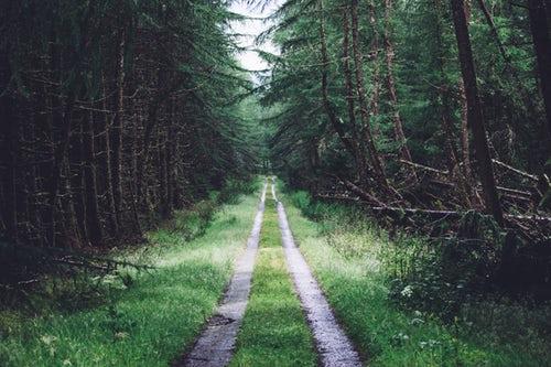 Mein Weg zurück zum Islam
